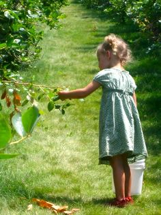Go blueberry picking! one of my favorite pass times as a kid, my grandmother would take us every summer