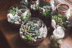 Un doux jardin d'hiver. Jardin d'intérieur, plante. Madmeoiselle Claudine