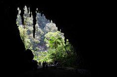 La Cueva del Guácharo es una formación natural donde se refugian los Guácharos,la caverna más grande de Venezuela.