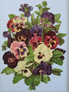 Beautiful bouquet of pansies .... one of my favourite flowers.
