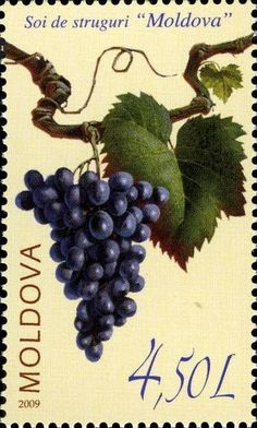 Moldova Postage Stamps (Commemorative) 2009 № 676 | The «Moldova» Grape Variety | Issue: The «Moldova» Grape Variety