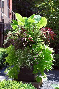 Summer Annuals | Container | Urban | Garden | Landscape | Design