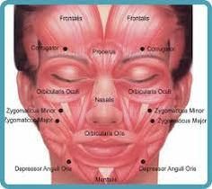 blank face diagram botox 2003 jetta gli stereo wiring muscle 18 6 stromoeko de rh 9 malibustixx acetylchloine chart