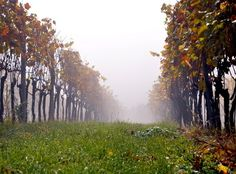 try sulphites-free wine! No more headache!