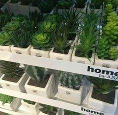 Plant Aesthetic, Aesthetic Photo, Aesthetic Pictures, Tee Shop, Pretty Pictures, Shades Of Green, Planting Flowers, Favorite Color, Greenery
