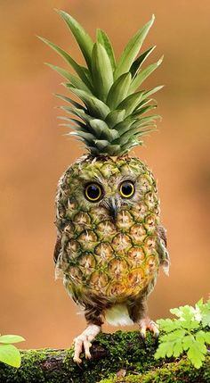 pineappowl :D just goes to show what sort of weird and wonderful things you can do with photoshop-type programs! To be honest, I'm not sure whether to burst out laughing or freak out!