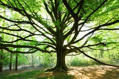 Forest trees - Google Search