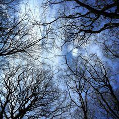 Spring is coming. #danishnature #bluesky #treetops #sunshine #nature #gooutside #nofilter #waitingforthehuntingseason #northernhunting www.northernhunting.com