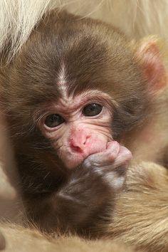 Baby pose | Flickr - Photo Sharing!