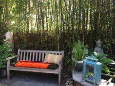 Outdoor Sofa, Outdoor Furniture, Outdoor Decor, Porch Swing, Bench, Gardens, Home Decor, Decoration Home, Room Decor