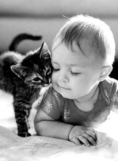 Baby animal videos, kindness to animals, cute photography, animal photography, cute baby Cute Funny Animals, Cute Baby Animals, Animals For Kids, Animals And Pets, Kittens Cutest, Cats And Kittens, Funny Babies, Cute Babies, Kindness To Animals