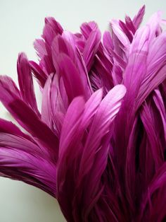 Magenta Feathers #winterwishes
