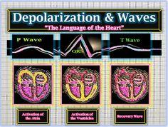 Depolarization of the Heart Chambers & Corresponding Wave Activity