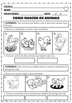 Science Worksheets, Social Studies, Pasta, Teacher, Eliana, Animals, Ideas, Gisele, Homeschool