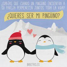 Y tú, ¿ya has encontrado a tu pingüino? ¡Feliz San Valentin! #SanValentin #ilustracion #illustration #pinguino #penguin #love #amor