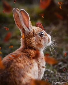 Fall is coming little by little. Falling leaves mushrooms all these colors in the trees walks in the woods and hot. Newborn Animals, Animals And Pets, Cute Animals, Woodland Creatures, Woodland Animals, Cat Hug, Walk In The Woods, In The Tree, Nature