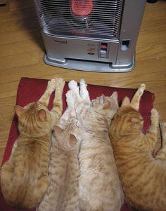 animales-que-aman-al-calor (6)