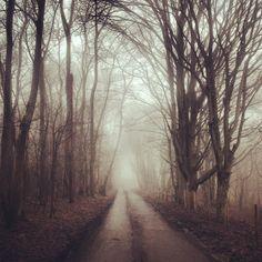 Headley Heath, Surrey. By Ben Roberts.