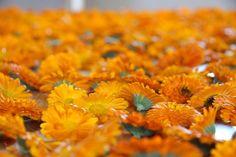 Calendula flowers befor drying