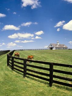 Thoroughbred Horses and KY Bluegrass
