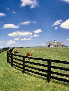 Black fences, big paddocks