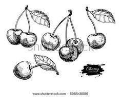 Find Cherry Vector Drawing Set Isolated Hand stock images in HD and millions of other royalty-free stock photos, illustrations and vectors in the Shutterstock collection. Cherry Tattoos, Red Ink Tattoos, Bff Tattoos, Random Tattoos, Small Tattoos, Cherry Drawing, Fruit Tattoo, Etching Tattoo, Fruits Drawing