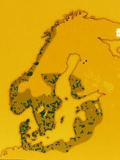 The map above shows the Viking home settlements during the Viking age.