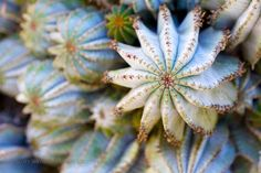 Shades of Blue and Green Photography by Scott Shephard