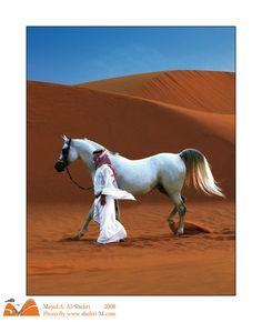 Arabian Horse show by shehri.deviantart.com on @deviantART