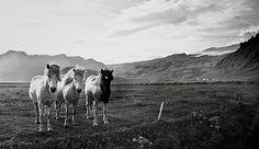 Equus Ferus Caballus – Guess What It Means