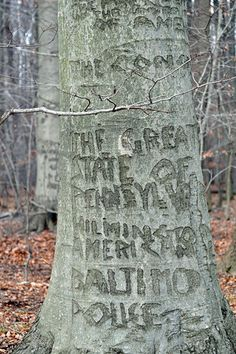 Photo by Ed Rybzynski. Patients of the VA medical center at Perry Point, MD carved messages into the trees many years ago. I remember seeing them when very young and being in awe of the writings.
