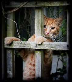 Chat ~ Cat appears to be peering thru' a trellis, but let's call it a window!