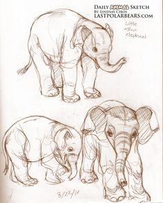 These are adorable little elephant sketches <3