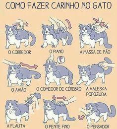 Cat, gato, dicas, animal, animais