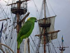 Parrot and pirate ship