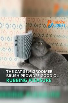 Cat Self Groomer Brush ?,Cat Self Groomer Brush ? The Cat Self Groomer Brush provides easy-access rubbing pleasure for cats, while the bristles simultaneously remove loose . Animals For Kids, Baby Animals, Funny Animals, Cute Animals, I Love Cats, Crazy Cats, Cute Cats, Adorable Dogs, Gato Gif