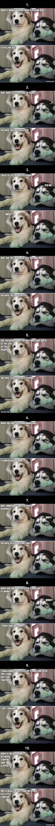10 Best Bad Puns Dog Memes Ever is part of Puns jokes - More memes, funny videos and pics on Dog Jokes, Puns Jokes, Corny Jokes, Funny Animal Jokes, Really Funny Memes, Cute Funny Animals, Stupid Funny Memes, Funny Animal Pictures, Puns Hilarious
