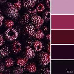 Color inspiration from a group of raspberries! Color inspiration from a group of raspberries! Color Schemes Colour Palettes, Colour Pallette, Color Combos, Best Color Combinations, Purple Color Schemes, Pantone, Decoration Palette, Boutique Deco, Raspberry Color