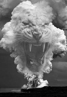 tiger | fierce | black & white | smoke | www.republicofyou.com.au