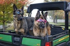 New Doggles