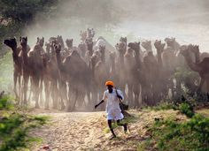 A camel herder walks his camels at Pushkar Fair in the desert Indian state of Rajasthan. Thousands of animals, mainly camels, are brought to the fair to be sold and traded. Foto Instagram, Like Instagram, Instagram Images, Om Namah Shivaya, Most Popular Instagram, Image Of The Day, Photo Story, Photojournalism, Teak