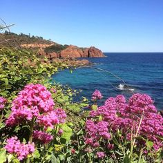 La corniche d'or le Trayas #fleurs #rose #esterel #mer #mediterannee #colorful #flowers #sea #love #look #picoftheday #photooftheday #instalike #iphoneonly #instagood #bestoftheday #nature #travel #visitvar #visitesterel #levarois #photo #cotedazurfrance http://ift.tt/2pFVMTn