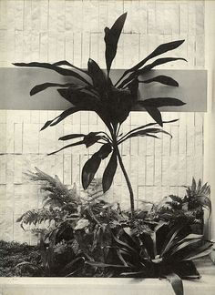 Black and white plants Tumblr, Botany, Garden Projects, Amazing Gardens, Flower Power, Planting Flowers, Plant Leaves, Art Photography, Photos