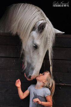 Kiss for a grey horse