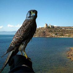 by http://ift.tt/1OJSkeg - Sardegna turismo by italylandscape.com #traveloffers #holiday | Dopo che si è mangiato due miei canarini l'ho liberato a calamosca con la promessa che non torna a casa mia  #Cagliari #casteddu #sardegna #italy #eu #sardegnacountry #lanuovasardegna #cagliariturismo #igerscagliari #cagliarigram #cagliariturismo #sardiniacoasttocoast #bestsardegnapics #sardegnacountry #lanuovasardegna #loves_united_sardegna #loves_united_cagliari #loves_united_germany…