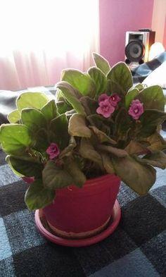 fokföldi_Csernik Lili Flower Aesthetic, Aesthetic Images, Art Pictures, Flower Art, Fall Decor, Flower Girl Dresses, Lily, Flowers, Gardening