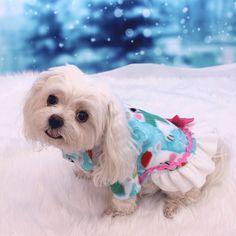 Perro suéter suéteres de perro perro polar por LittleDogFashion