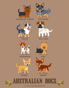 Illustrations   192 races de chiens classés par pays dorigine Photo