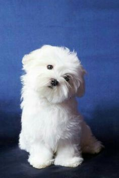 Asb my Liefie Animals And Pets, Baby Animals, Funny Animals, Cute Animals, Baby Cats, Cute Puppies, Cute Dogs, Dogs And Puppies, Doggies