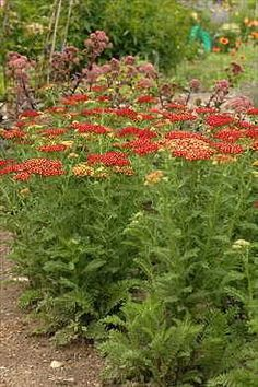 10 Companion Plants for the Orchard.